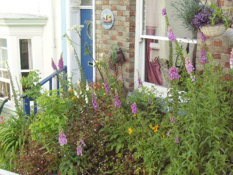 foxglove garden, Staithes