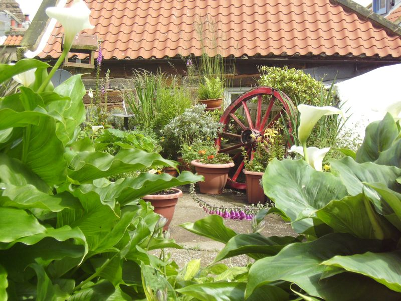 Seaside garden, Staithes