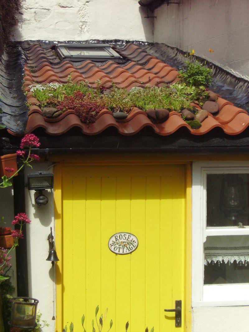Roof with Sedum